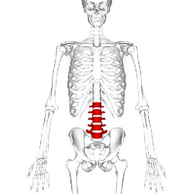 lumbar radicular pain