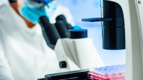 Let's Dive Into The History of Stem Cell Therapy